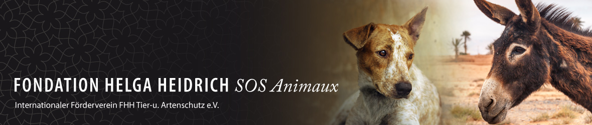 header_start_fhh_sos_animaux